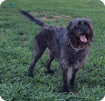 Hound (Unknown Type) Mix Dog for adoption in Mechanicsburg, Ohio - Trixie