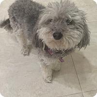 Adopt A Pet :: Tippy - Chandler, AZ