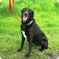 Adopt A Pet :: Scarlett - Pleasant Grove, CA