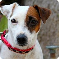 Adopt A Pet :: Jules - Los Angeles, CA