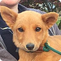 Adopt A Pet :: HAZEL AND HONEY - Fishkill, NY