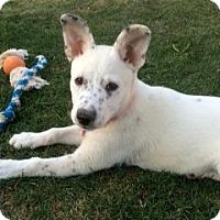 Adopt A Pet :: Lilah - Scottsdale, AZ
