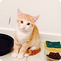 Adopt A Pet :: Chloe - Chicago, IL