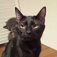 Adopt A Pet :: Elisabeth - Clarkson, KY