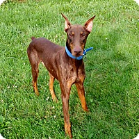 Adopt A Pet :: Murphy--adopted!! - New Richmond, OH