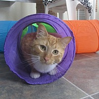 Adopt A Pet :: Biscuit - Ridgway, CO