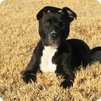 Adopt A Pet :: Rocky (Donner) - Wichita Falls, TX