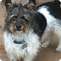 Adopt A Pet :: Manny - Bedminster, NJ