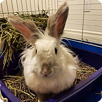 Adopt A Pet :: Fluffy Flower - Winnipeg, MB