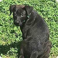 Adopt A Pet :: Whiskey meet me 4/7 - Manchester, CT
