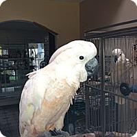 Adopt A Pet :: AJ - Fountain Valley, CA