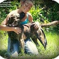 Adopt A Pet :: Apollo - Eustis, FL