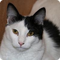 Adopt A Pet :: Theo - O'Fallon, MO