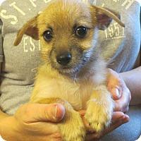 Adopt A Pet :: Faye - Salem, NH