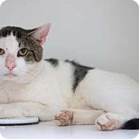 Adopt A Pet :: Prickly Pete - Merrifield, VA