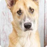 Adopt A Pet :: Roscoe - Inverness, FL