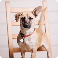 Adopt A Pet :: Eva Marie - Portland, OR