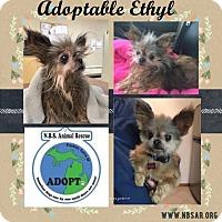 Adopt A Pet :: Ethyl - Troy, MI