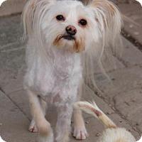 Adopt A Pet :: Shelton - Phoenix, AZ