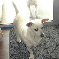 Adopt A Pet :: Corey - Temecula, CA