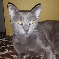 Adopt A Pet :: Spencer - Orlando-Kissimmee, FL