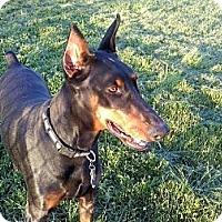 Adopt A Pet :: Caitlin - Pending!! - New Richmond, OH