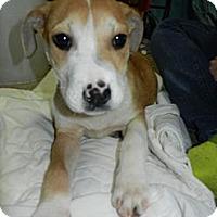 Adopt A Pet :: Steph - South Jersey, NJ