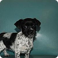Adopt A Pet :: Mayla - Harrisburgh, PA