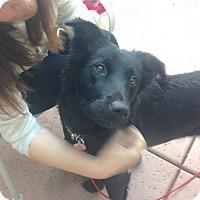 Adopt A Pet :: Mini - Scottsdale, AZ