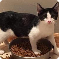 Adopt A Pet :: Applejack - East Hanover, NJ