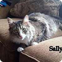 Adopt A Pet :: Sally - Millersville, MD