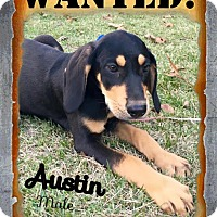 Adopt A Pet :: austin in CT - Manchester, CT
