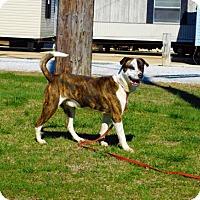 Adopt A Pet :: Bandit-021307k - Tupelo, MS