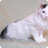 Adopt A Pet :: Winchester - Lexington, KY