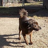 Adopt A Pet :: Kaspersky - Girard, GA