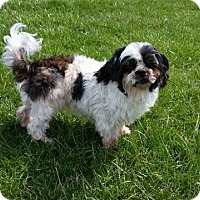 Adopt A Pet :: ABBY - Port Clinton, OH