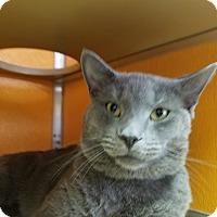 Adopt A Pet :: Cloud - Elyria, OH