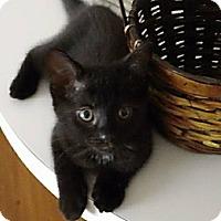 Adopt A Pet :: Boo - Ft. Lauderdale, FL