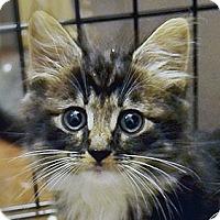 Adopt A Pet :: Fuzzbucket - Brooklyn, NY