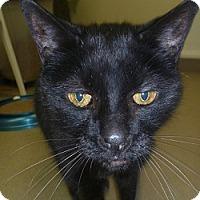 Adopt A Pet :: Amos - Hamburg, NY