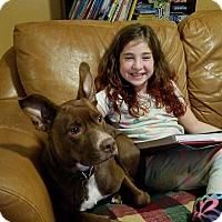 Adopt A Pet :: maui - North Brunswick, NJ
