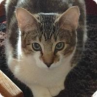 Adopt A Pet :: Wilder - Buhl, ID