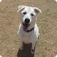 Adopt A Pet :: GRACE - Plano, TX