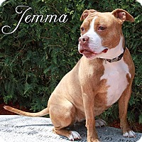 Adopt A Pet :: Jemma - Fall River, MA