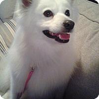 Adopt A Pet :: Ally - St. Louis, MO