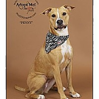 Adopt A Pet :: Penny - Louisville, KY