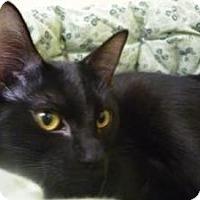 Adopt A Pet :: Poppy - Milwaukee, WI