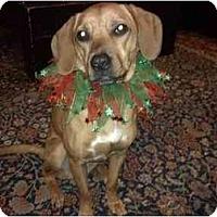Adopt A Pet :: Sally - Belleville, MI