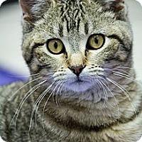 Adopt A Pet :: Sassafras - Chicago, IL