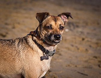 Terrier (Unknown Type, Small) Mix Dog for adoption in Orange, California - Buster